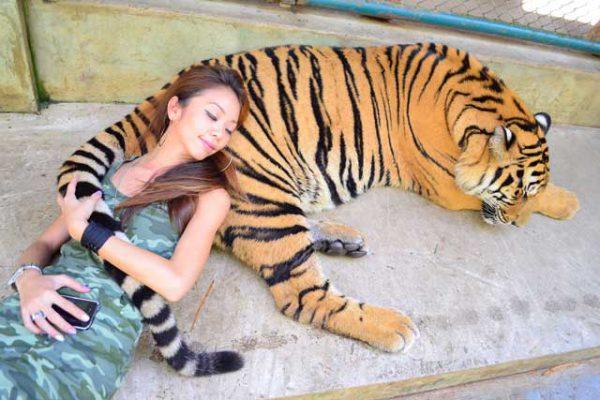 tiger kingdom and elephant tour
